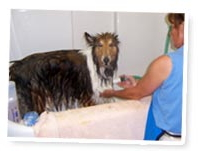 grooming your pet at Mallard Pointe in Coal Valley